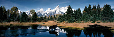 Teton Mountains Photograph - Moose & Beaver Pond Grand Teton by Panoramic Images