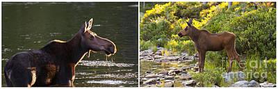 Photograph - Moose And Baby 5 by Glenn Gordon
