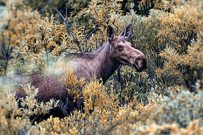 Photograph - Moose by Bill Howard