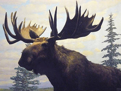 Photograph - Moose Diorama by Mary Ann  Leitch