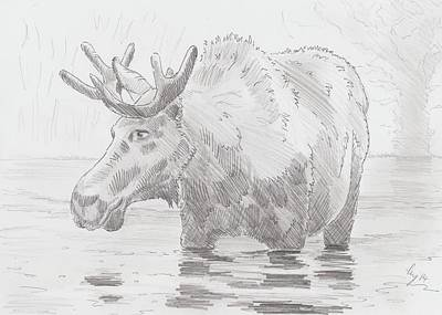 Drawing - Moose In Water by Mike Jory