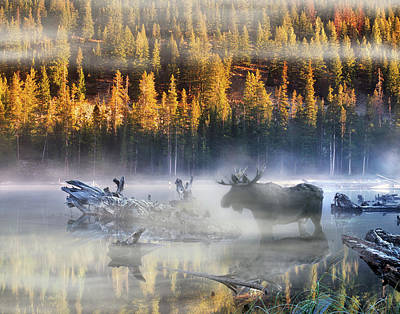 Moose Lake Art Print by Leland D Howard