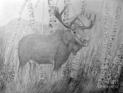 Drawing - Moose by Peggy Miller