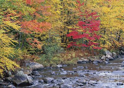 Moose River Autumn Art Print by Alan L Graham