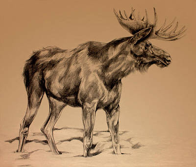 Michigan Drawing - Moose Sketch by Derrick Higgins