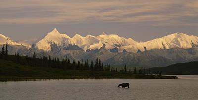 Moose Standing On A Frozen Lake, Wonder Art Print
