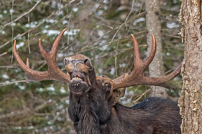 Mooses Tooth Photograph - Moose Teeth by Steve Dunsford