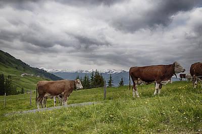Tyrol Wall Art - Photograph - Moove Over by Nigel Jones