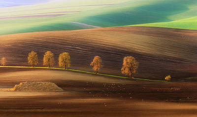 Czech Republic Photograph - Moravian Trees by Piotr Krol (bax)