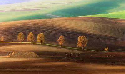 Moravian Trees Art Print