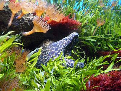 Moray Underwater Art Print by Tilen Hrovatic