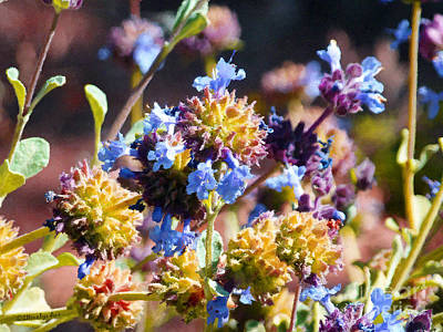 Photograph - More Arizona Wildflowers  by Methune Hively
