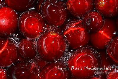 Photograph - More Berries To You by Sharon Farris