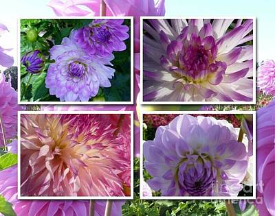 More Dahlias Art Print by Susan Garren