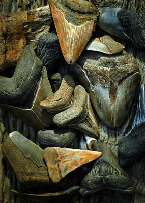 More Megalodon Teeth Art Print by Rebecca Sherman