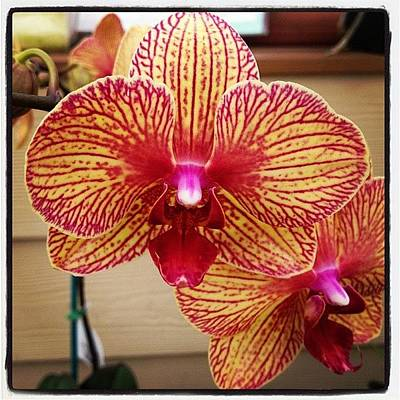 Orchids Photograph - More Orchids ! #orchid by Megan Smith