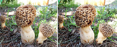 Photograph - Morels On The Forest Floor In Stereo by Duane McCullough