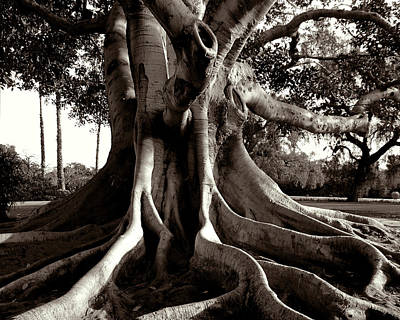 Digital Art - Moreton Bay Fig by Timothy Bulone