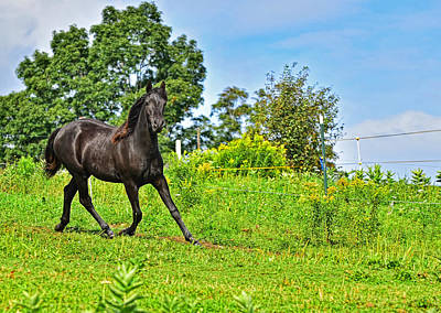 Photograph - Morgan Horse 01 by Jim Boardman