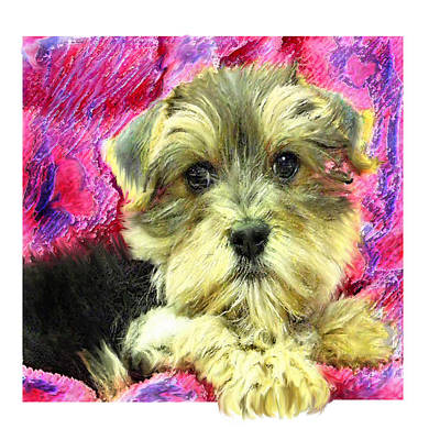 Yorkie Digital Art - Morkie Puppy by Jane Schnetlage