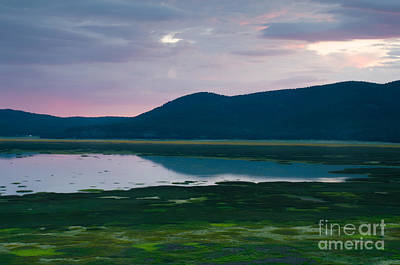 Photograph - Mormon Lake Sunset by Tamara Becker