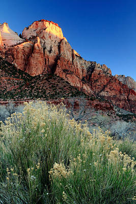 Photograph - Morning At Zion National Park by Eric Foltz