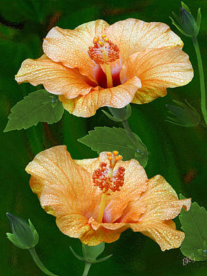 Photograph - Morning Blooms - Hibiscus by Ben and Raisa Gertsberg
