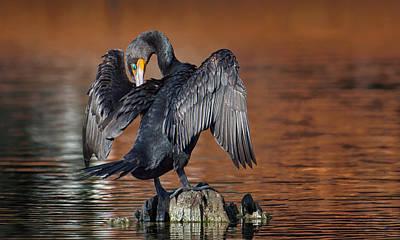 Morning Cormorant Art Print by David Bond