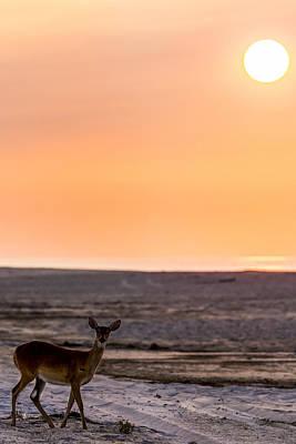 Deer On Beach Photograph - Morning Deer by Ryan Moore