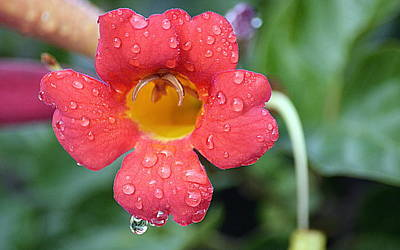 Photograph - Morning Dew by AJ  Schibig