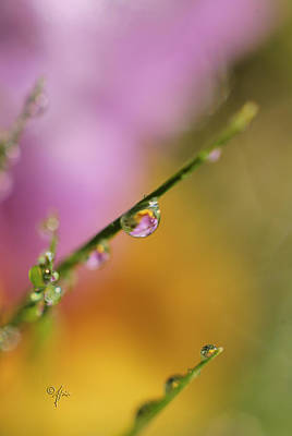 Photograph - Morning Dew by Arthur Fix
