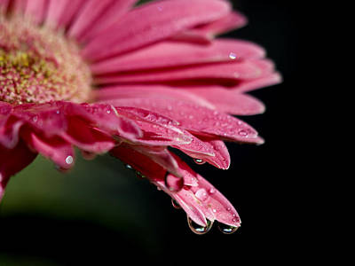 Art Print featuring the photograph Morning Dew by Joe Schofield