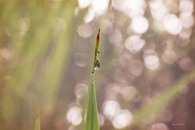 Designers Choice Photograph - Morning Dew On A Grass by Angela A Stanton