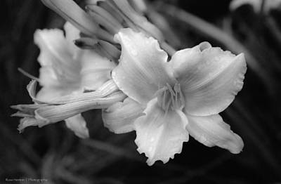 Art Print featuring the photograph Morning Dew On Lilies by Ross Henton