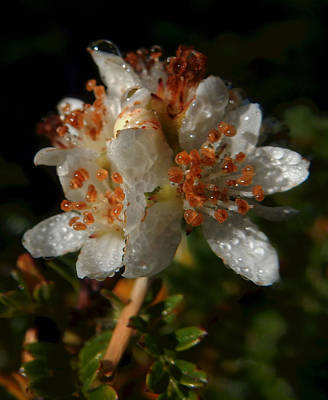 Photograph - Morning Dew by Pamela Walton