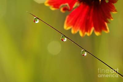 Art Print featuring the photograph Morning Dew by Patrick Shupert