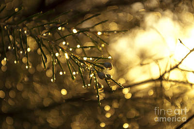 Art Print featuring the digital art Morning Dew by Serene Maisey