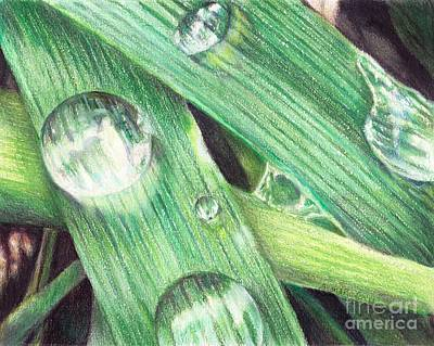 Shana Jackson Painting - Morning Dew by Shana Rowe Jackson