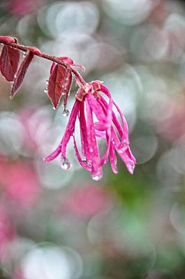 Photograph - Morning Dewdrops by Jan Amiss Photography