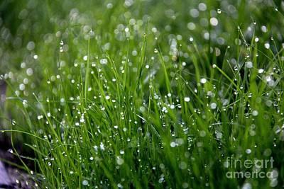 Morning Dewdrops Original