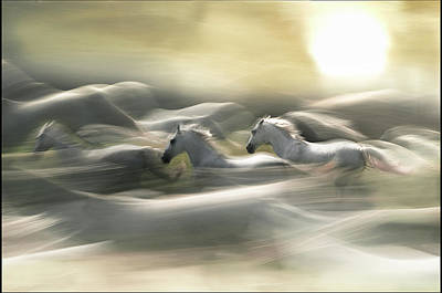 Running Horses Photograph - Morning Dream by Milan Malovrh