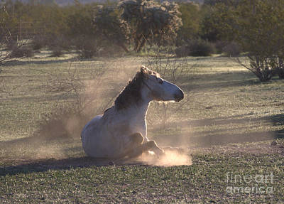 Art Print featuring the photograph Morning Dust Bath by Ruth Jolly
