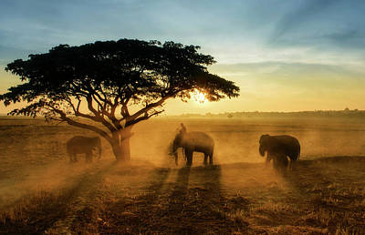 Thailand Photograph - Morning Elephant Home Town by Saravut  Whanset
