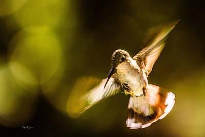 Photograph - Hummingbird - Morning Flight by Barry Jones