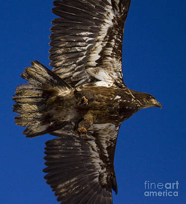 Go For Gold - Morning Flight by J L Woody Wooden