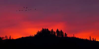 Photograph - Morning Flight by Joseph Bowman