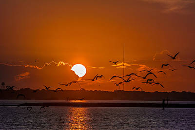 Morning Flight Art Print by RC Pics