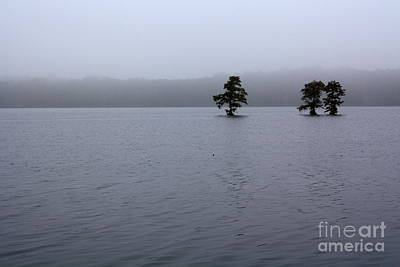 Photograph - Morning Fog On Lake by Danielle Groenen