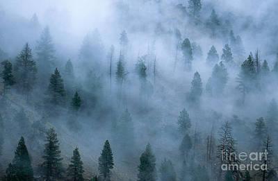 Morning Fog Art Print by William H. Mullins