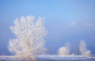Winter Landscapes Photograph - Morning Frost by Darren  White
